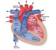 obat herbal jantung lemah, obat tradisional jantung lemah, obat tradisional lemah jantung, obat herbal untuk jantung lemah, obat alami penderita jantung lemah, ramuan obat herbal jantung lemah, obat herbal penyembuh lemah jantung, mengobati jantung lemah, mengatasi jantung lemah secara alami, mengatasi jantung lemah pada bayi, mengobati lemah jantung secara tradisional, mengobati detak jantung lemah, mengobati detak jantung lemah, bagaimana mengobati jantung lemah, cara mengobati lemah jantung, mengobati jantung yang lemah, obat sakit jantung, jamu obat tradisional penyembuhan lemah jantung,